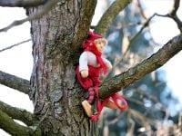 En nisse på et træ, foto ABW