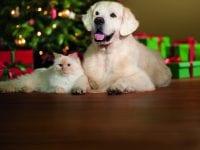 Julefest for byens kæledyr