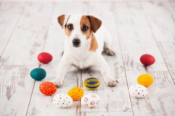 Påskefrokost for hunde i Odense